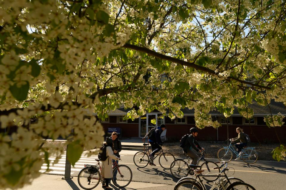 Students on bikes underneath a blooming tree