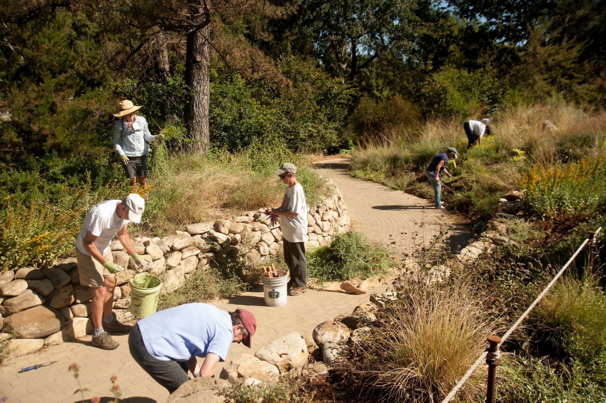 People pull weeds in the Arboretum