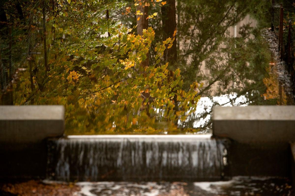 Water flows over weir on Arboretum Waterway.