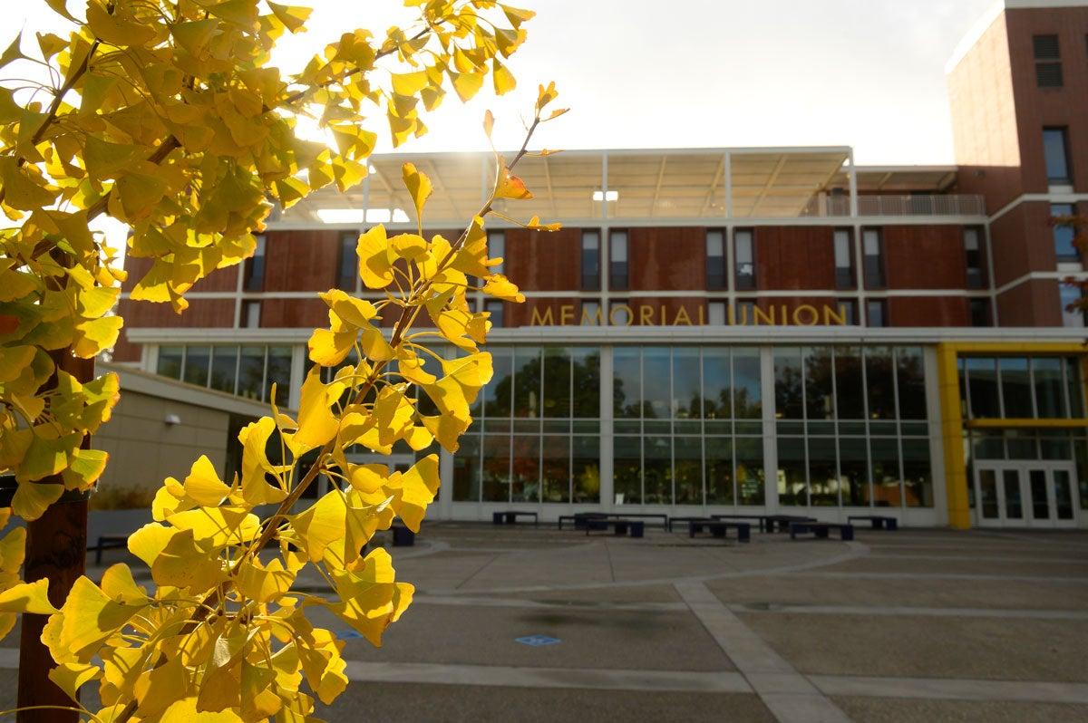 Yellow leaves, Memorisl Union in background