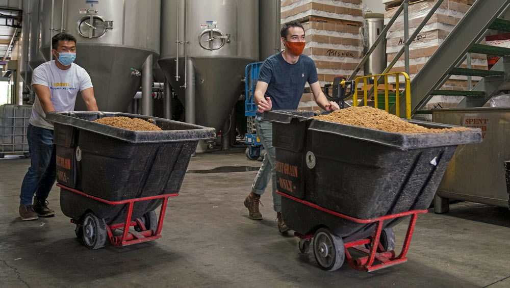 Students push bins on wheels, filled with spent brewers grain.