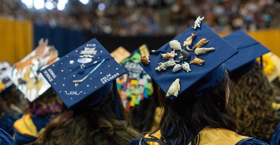 graduation cap contest uc davis