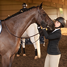 equestrian uc davis athletics
