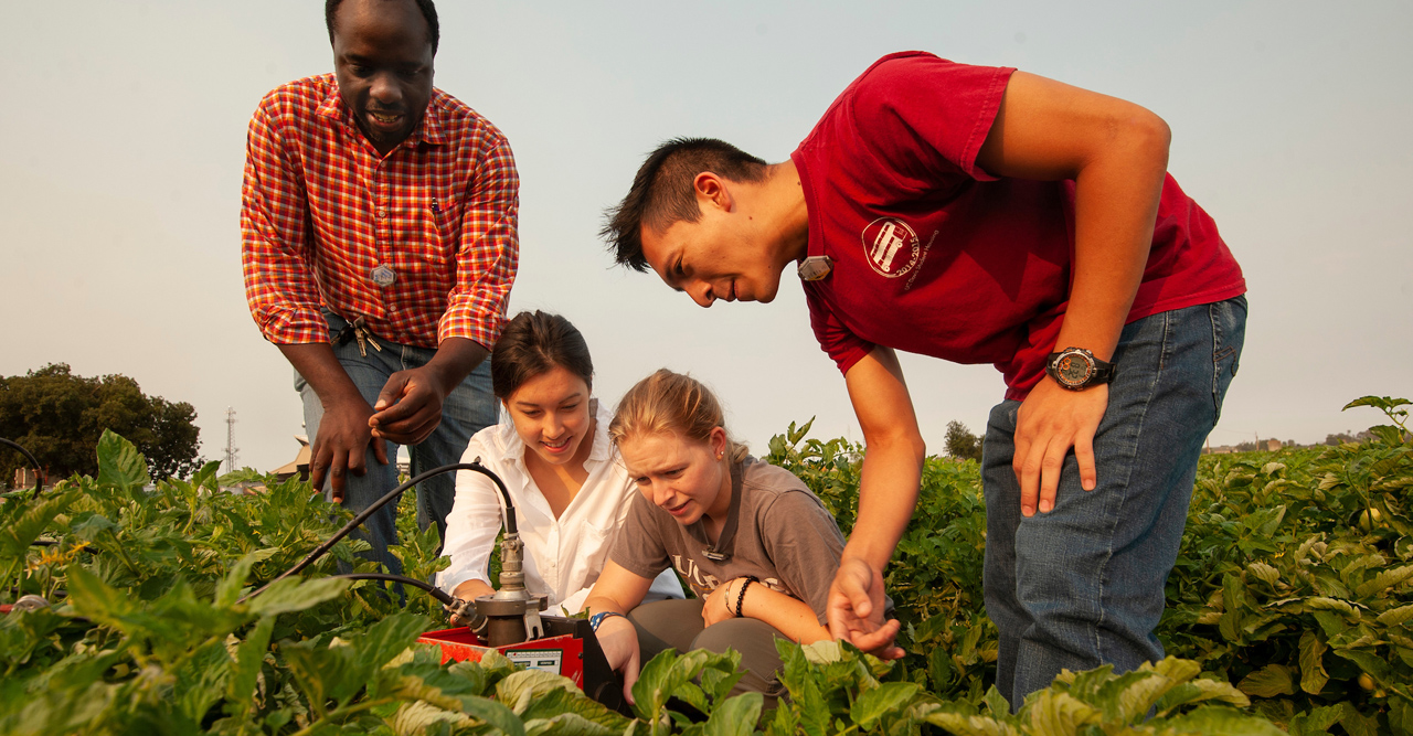 Students measure soil moisture content during an agricultural research project - undergraduate research