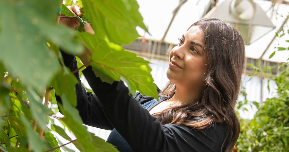 2.Maria Sandate-Reyes, a third year plant sciences major, poses for a photo at the Veg Crops greenhouses on May 21, 2018. Sandate-Reyes is an intern, working with Garry Pearson, the lead greenhouse manager for CA&ES. She wants to be a Pest Control Advisor. Karin Higgins/UC Davis