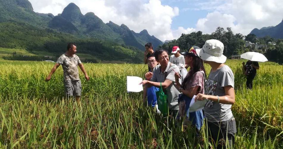 Bangbang Co-op consumers visiting a small farmer's organic rice field in a Zhuang village, southwest China, to learn about his farming practices.
