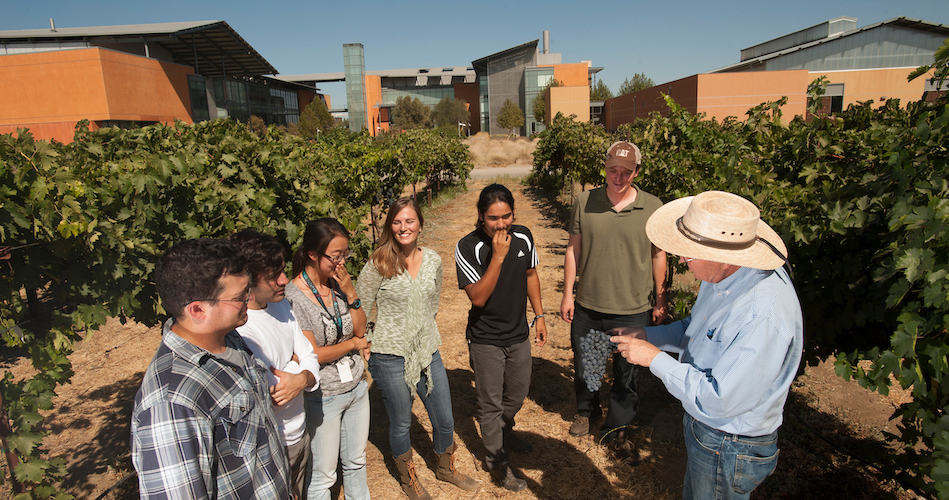 Dr. Andy Walker (right) talks with students in the vineyard outside the RMI (Richard Mondavi Institute for Food and Wine on Friday September 12, 2013 at UC Davis.  The students are (l to r) Jacob Uretsky, a viticulture and enology student; Joaquin Fraga, a viticulture and enology student; Xiaoquig Xie, an internatioal student in a viticulture and enology student;  Cassandra Bullock, horticulture and agronomy; Bryan Ramirez, a viticulture and enology student;  and and Philippe Venghiattis, viticulture and enology.