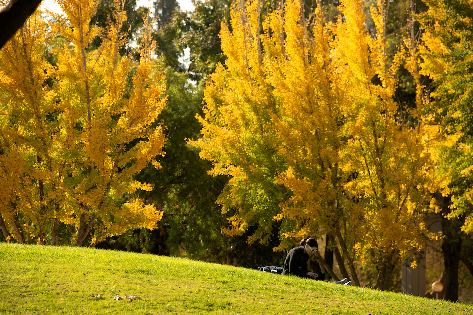A student works on the grass surrounded by yellow leaved trees.