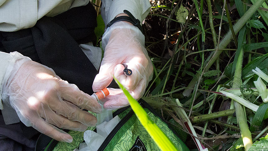 Hands in medical gloves collecting samples in the wild using tubes