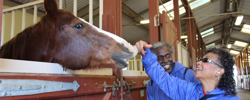 A horse nuzzles a woman's hand as a nearby man smiles