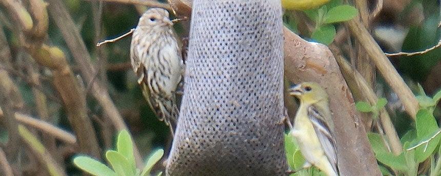 Two birds on a bird-feeder bag