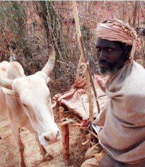 Huka Bidu poses for the camera with one of his cattle