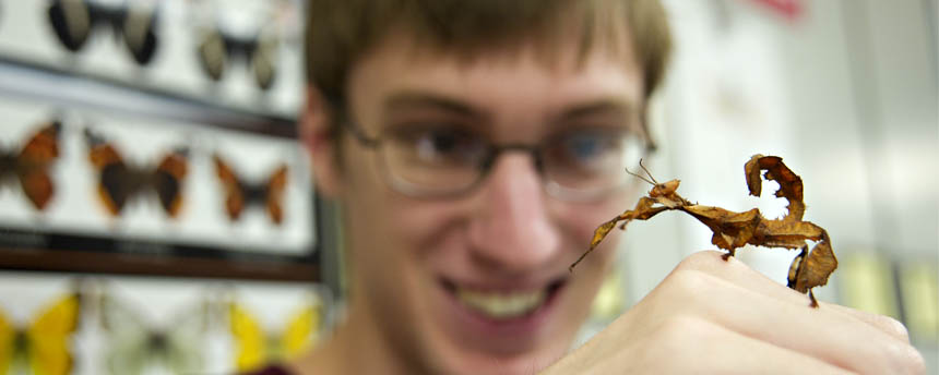 Close up of man with a mantis insect on his hand
