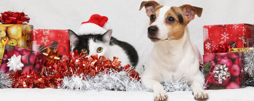 Photo of dog and cat surrounded by ribbons and wrapped gift boxes