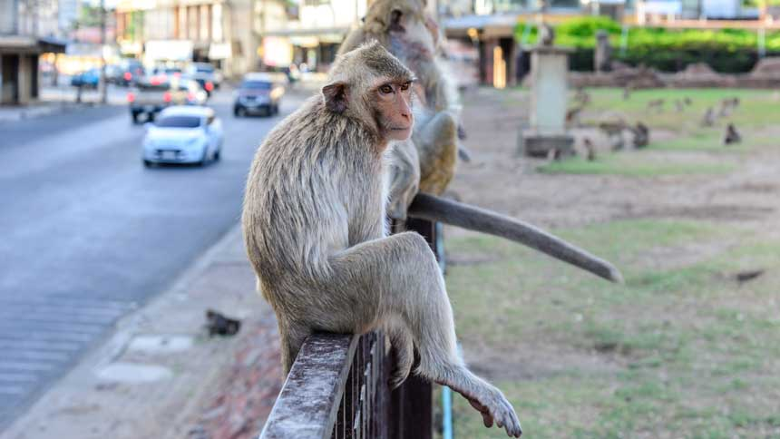Photo of a monkey sitting on a fence in an urban park