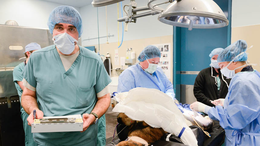 A doctor in scrubs faces the camera during a canine surgery