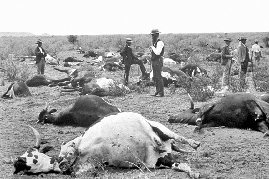 Dead cattle laying on the ground as men in hats observe circa 1996