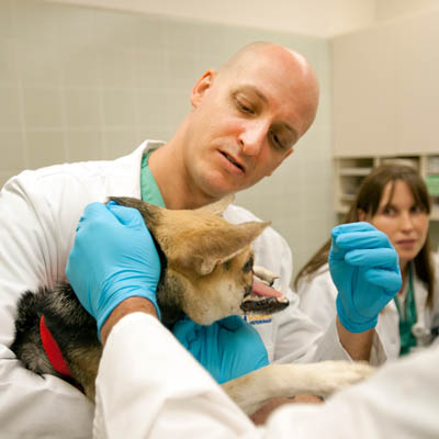 Two doctors examine a dog with facial injury