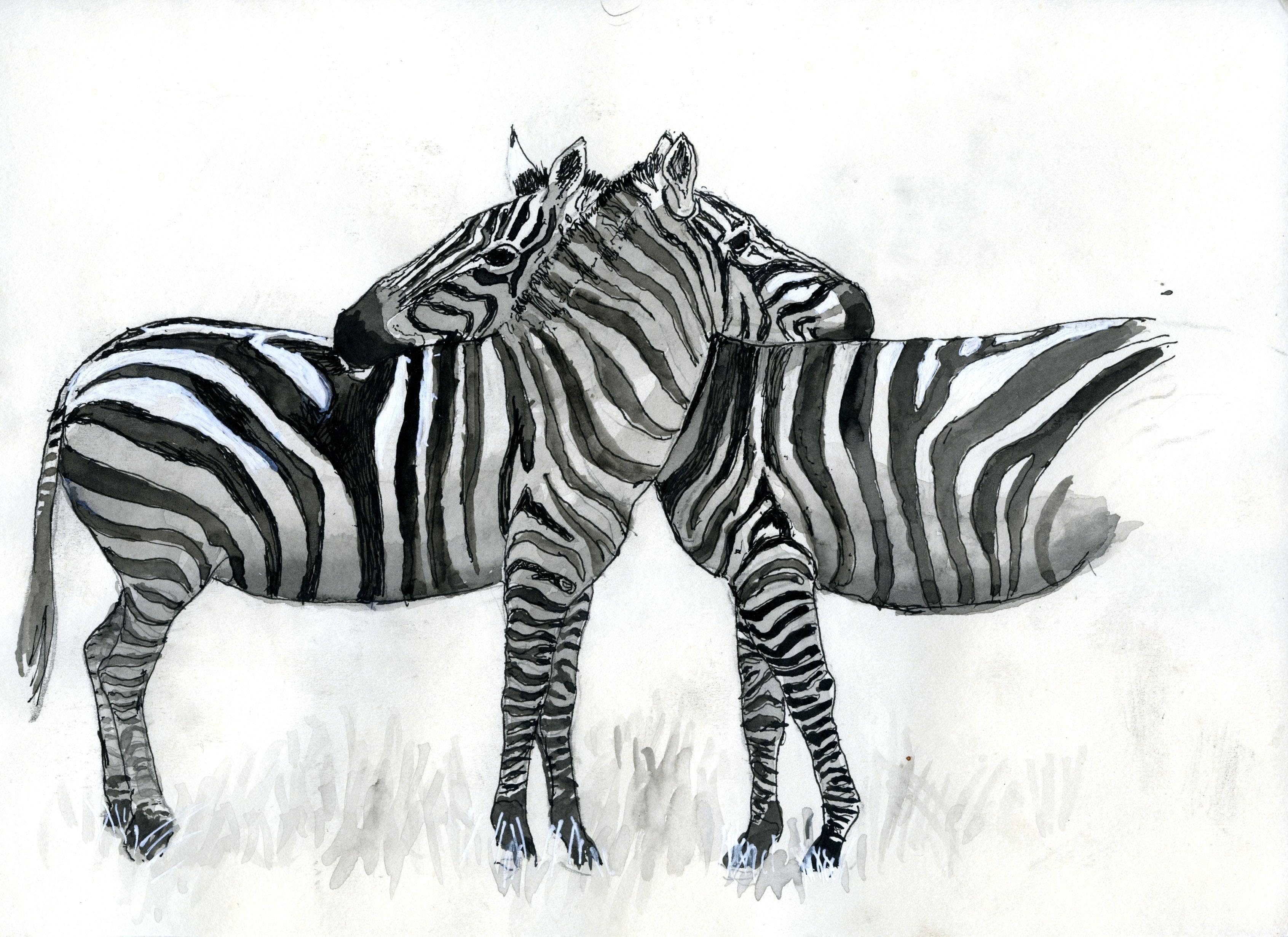 wildlife biologist earns his u0027zebra stripes u0027 with new book uc davis