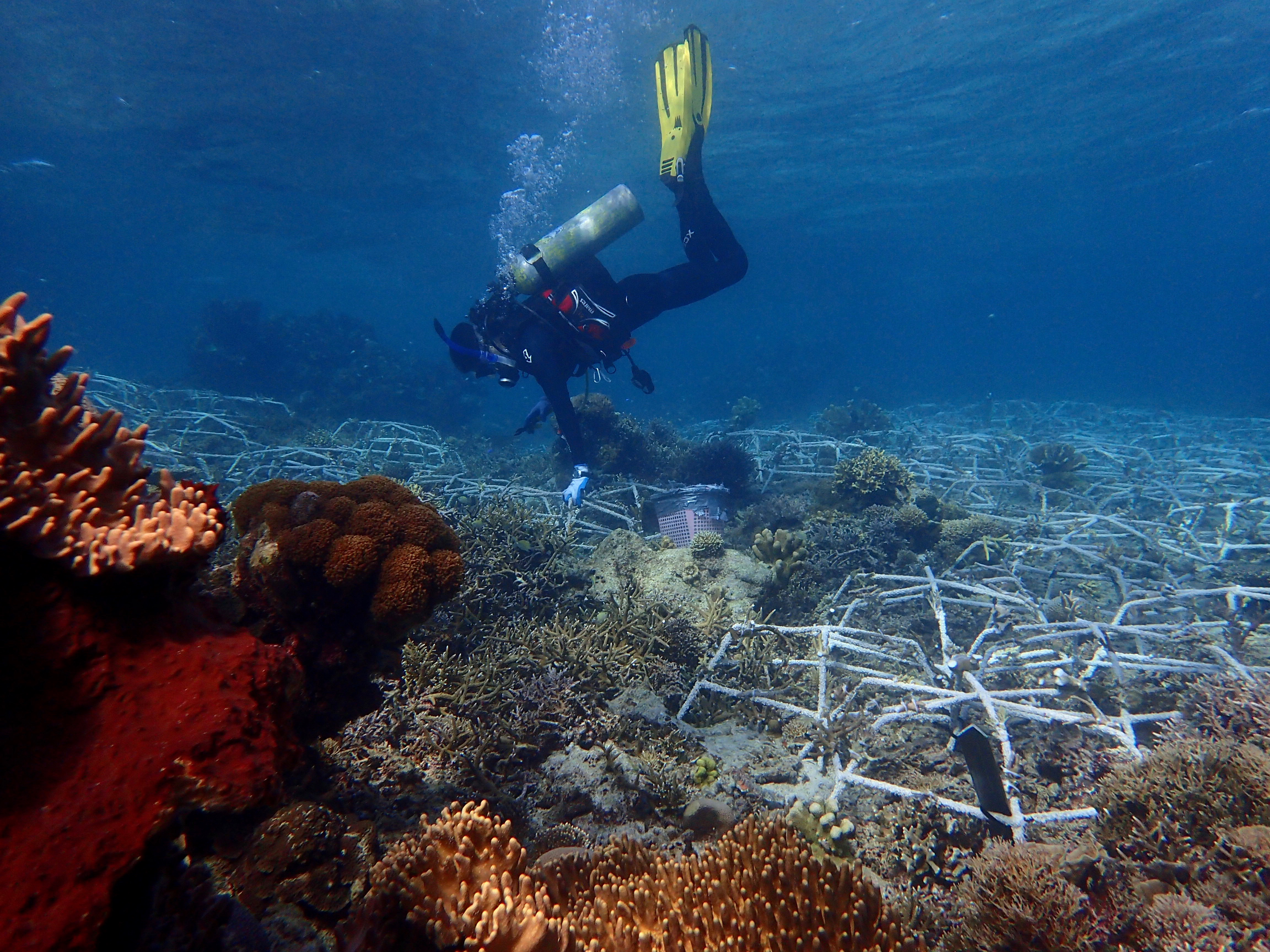 Indonesia Search Date 2018 10 27 Produk Ukm Bumn Hot Wheels Bat Mobile Ag Garage Even After Being Severely Damaged By Blast Fishing And Coral Mining Reefs Can Be Rehabilitated Over Large Scales Using A Relatively Inexpensive