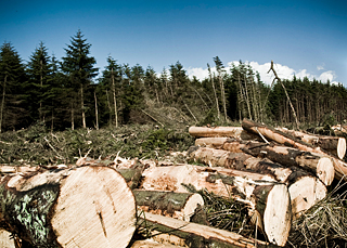 california history deforestation California is a leader in progressive environmental policies  and peru that are  lowering their carbon emissions from deforestation and forest degradation.