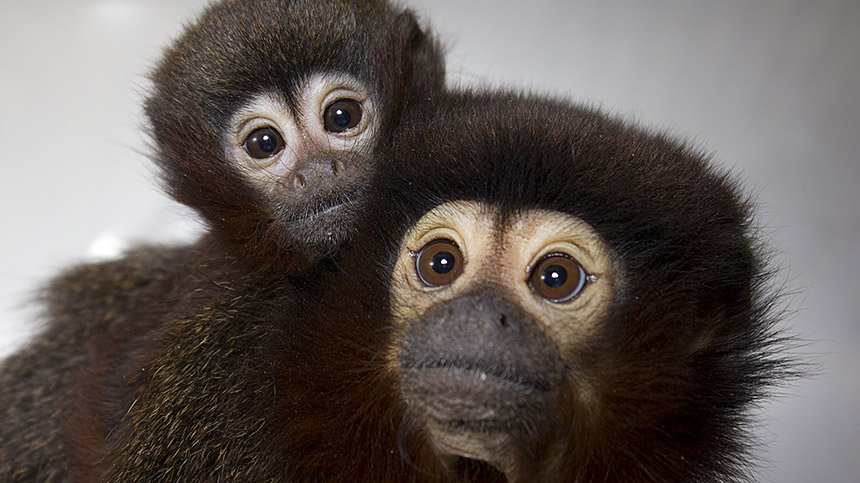 facts about the california national primate research