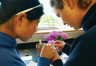 Two female students examine a plant sample near a window