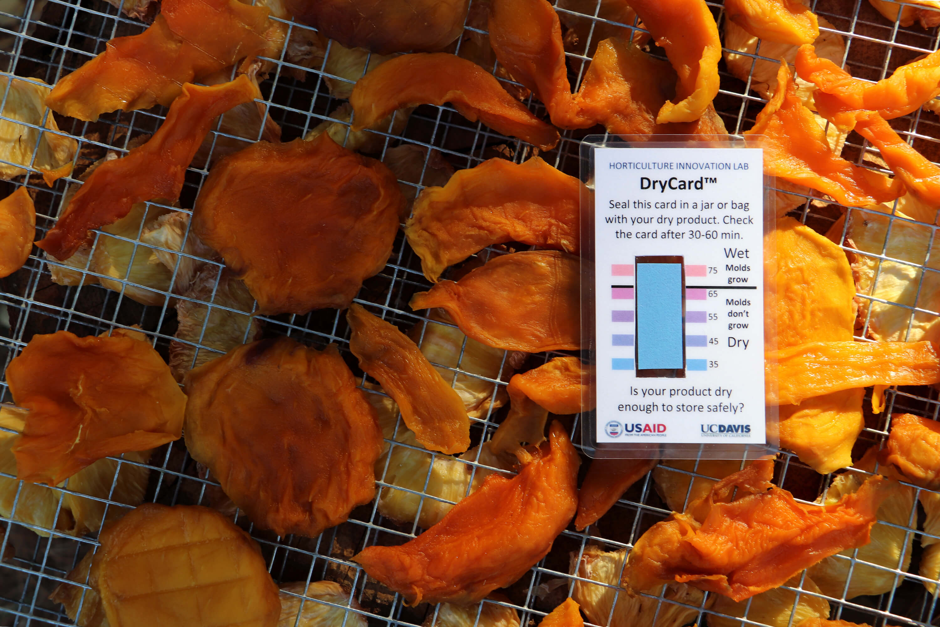 DryCard: Inventing a Low-Cost Solution To Reduce Food Waste | UC Davis