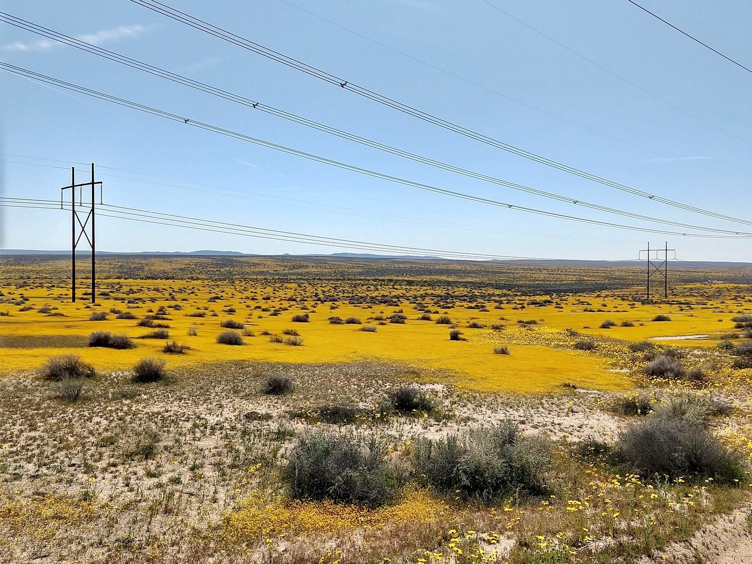 Mojave Desert blanketed in yellow flowers