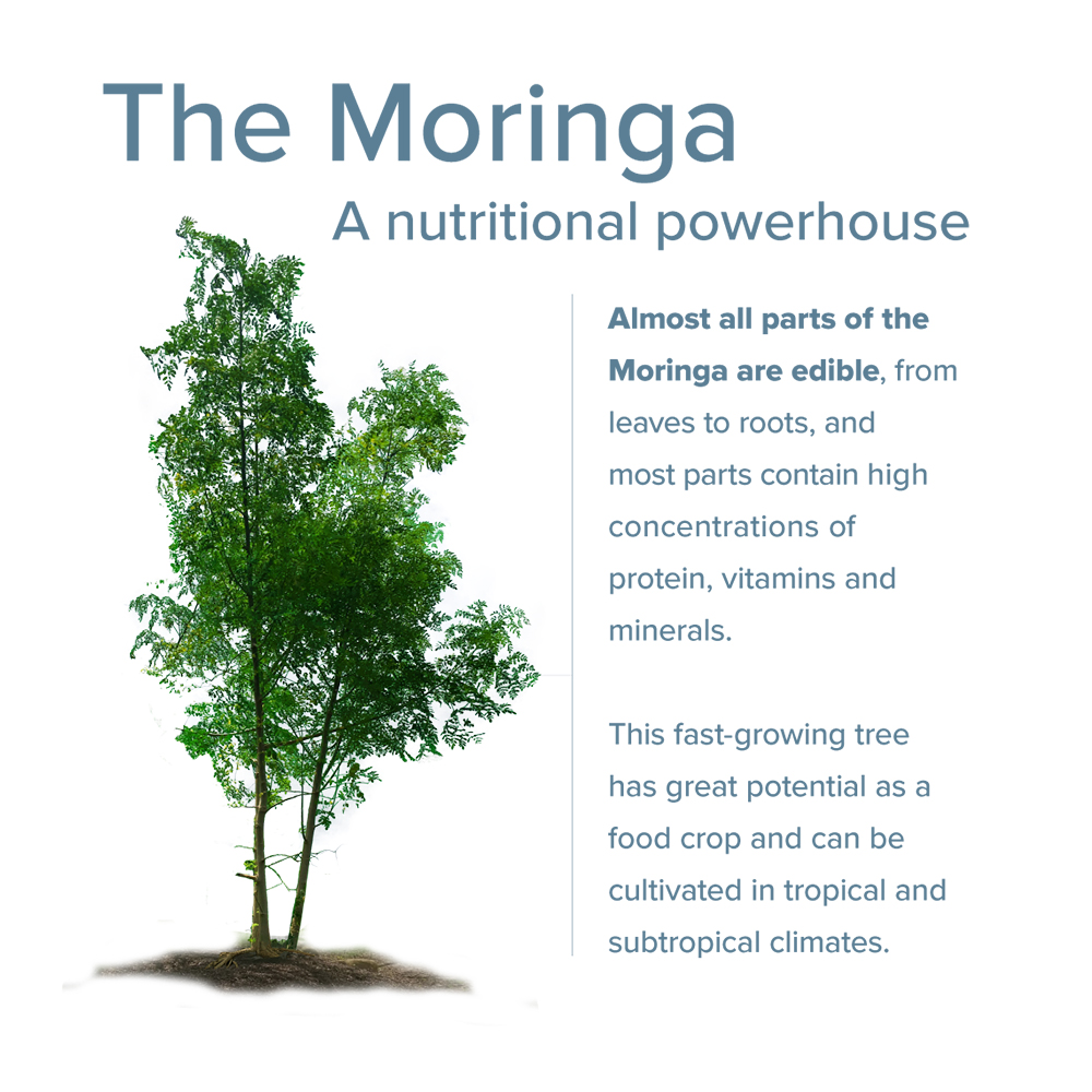 Moringa Next Superfood
