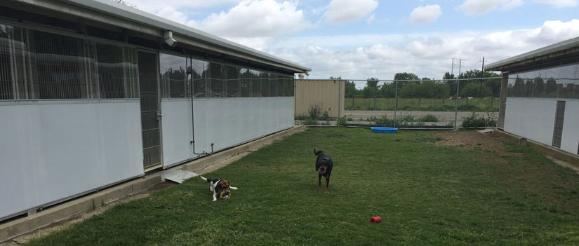 Two dogs at play in TRACS yard