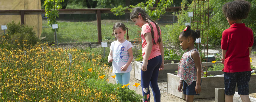 Children enjoy looking at the gardens and wildflowers on the UC Davis campus