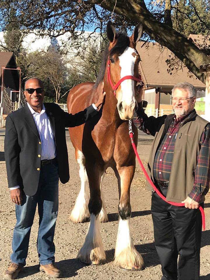 Two men stand beside Clydesdale.