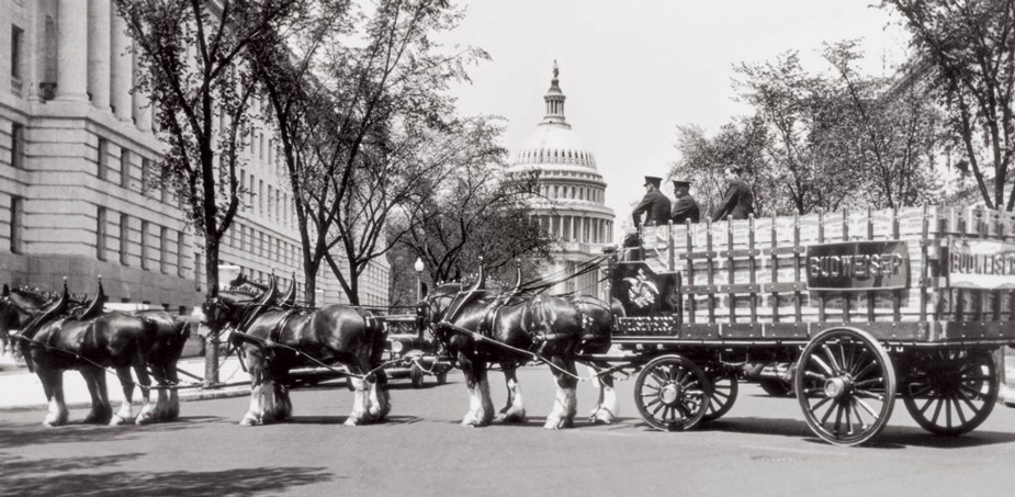 Budweiser horses and wagon at White House, black and white