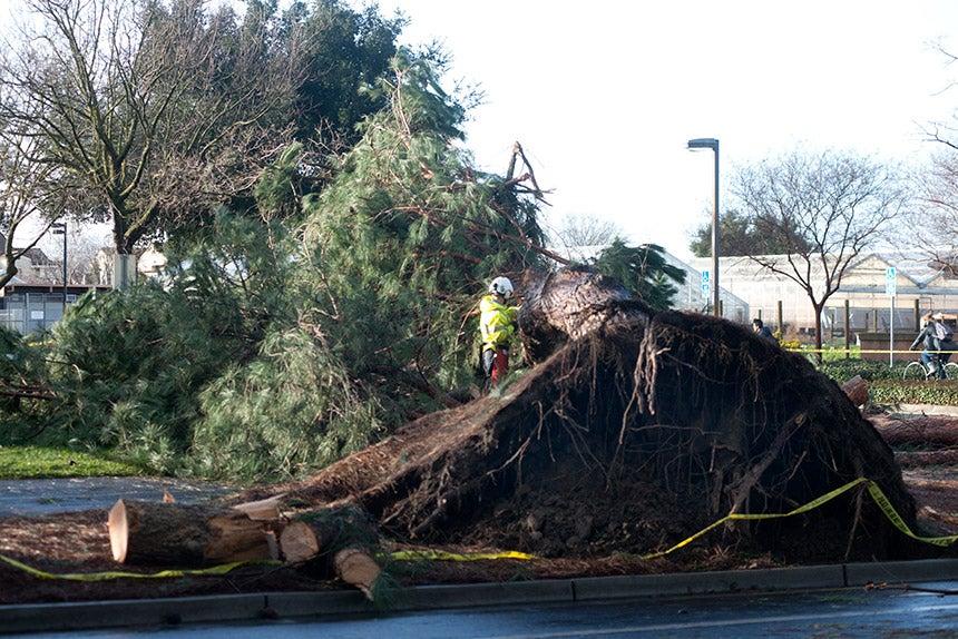 A tree in Parking Lot 35 fell.