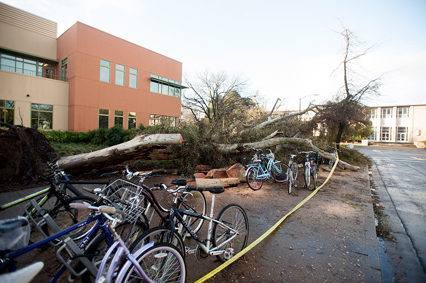 A large eucalyptus tree fell north of the Student Community Center.