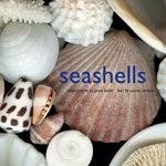 Seashells book cover, showing seashells