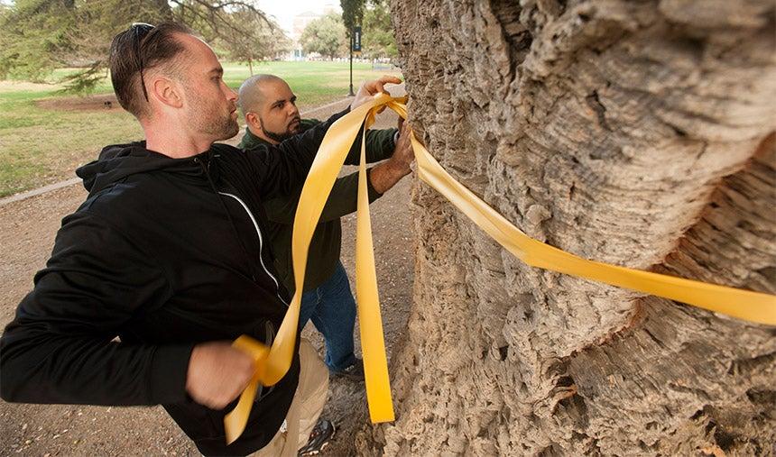 Two men tie a ribbon around a tree.