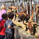 Kids look at cows