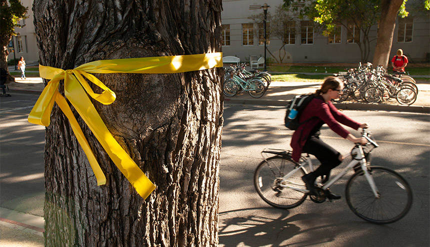 A bicyclist passes a yellow ribbon around a tree.