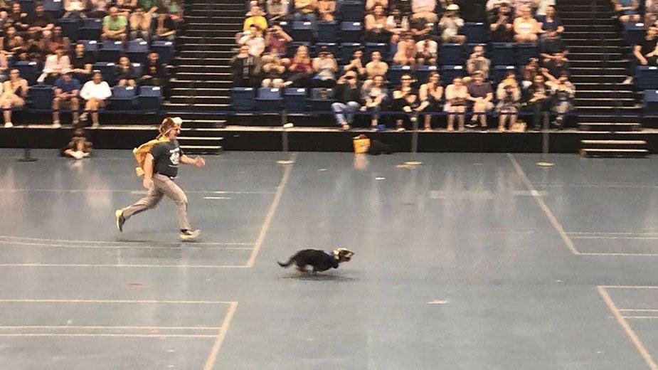 Dean Lairmore races a dachshound.