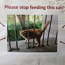Please stop feeding this cat
