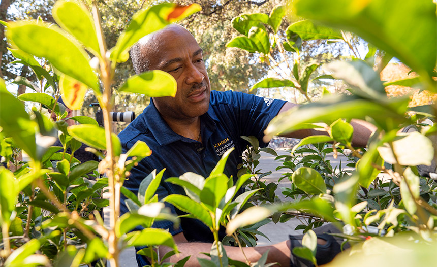 Chancellor Gary S. May trims a shrub.