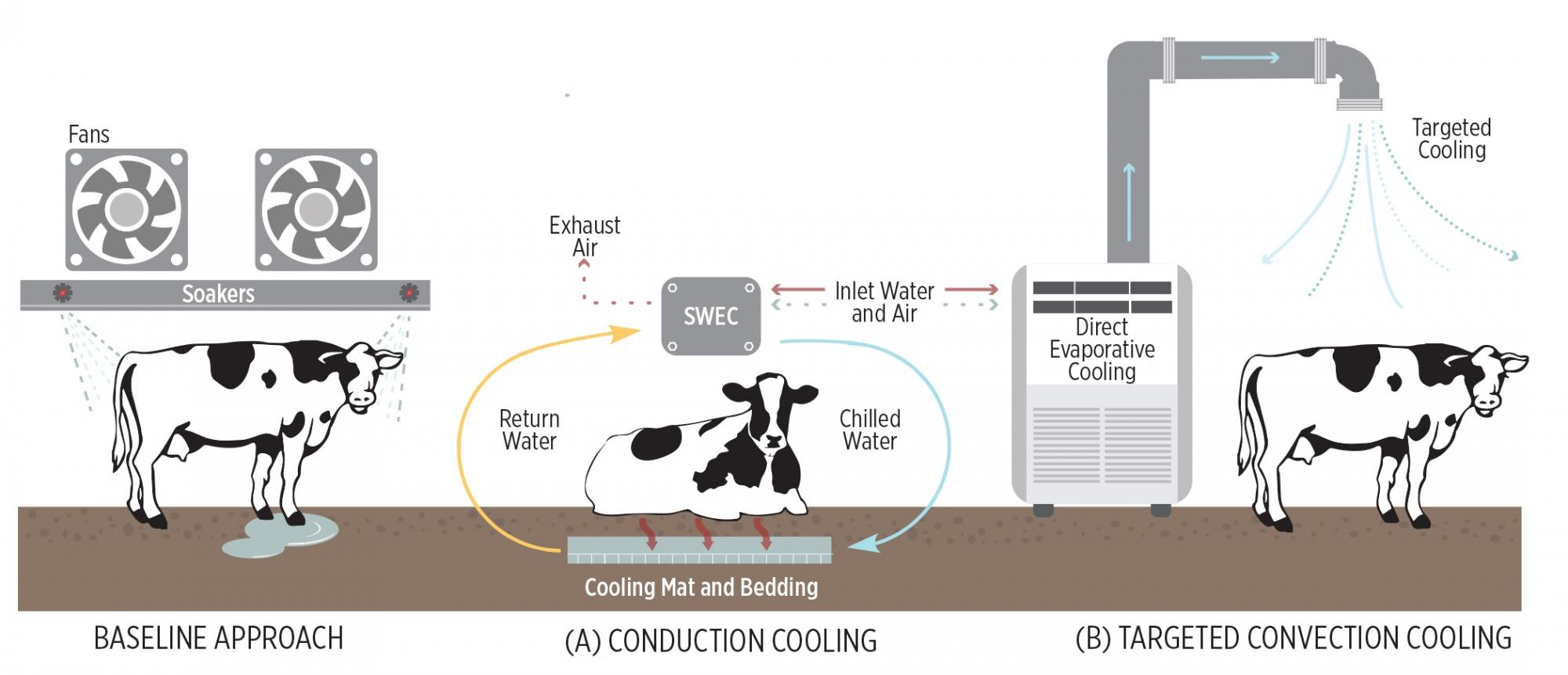 cooling technologies for cows