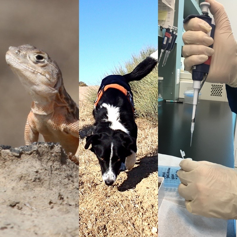 Composite photo of lizard, dog and scientific lab work