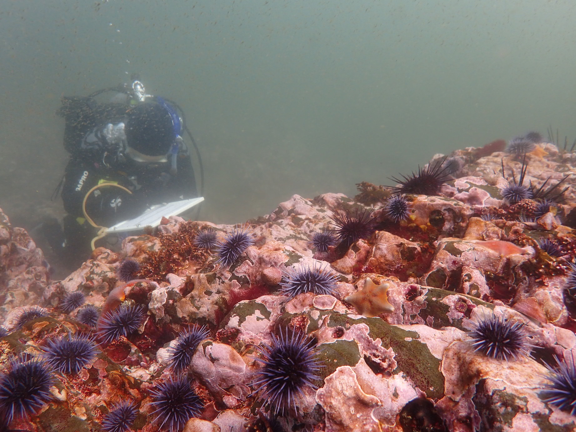 California's crashing kelp forest