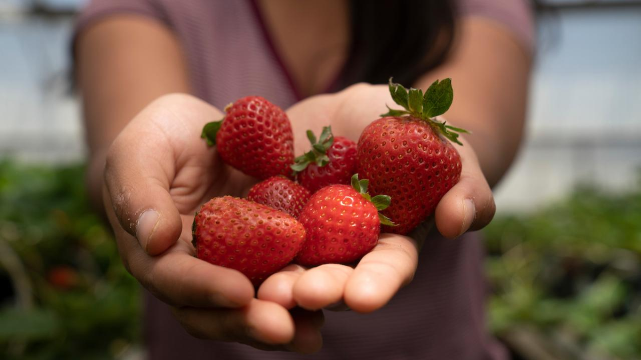 A young woman holds a handful of strawberries on her open palms.