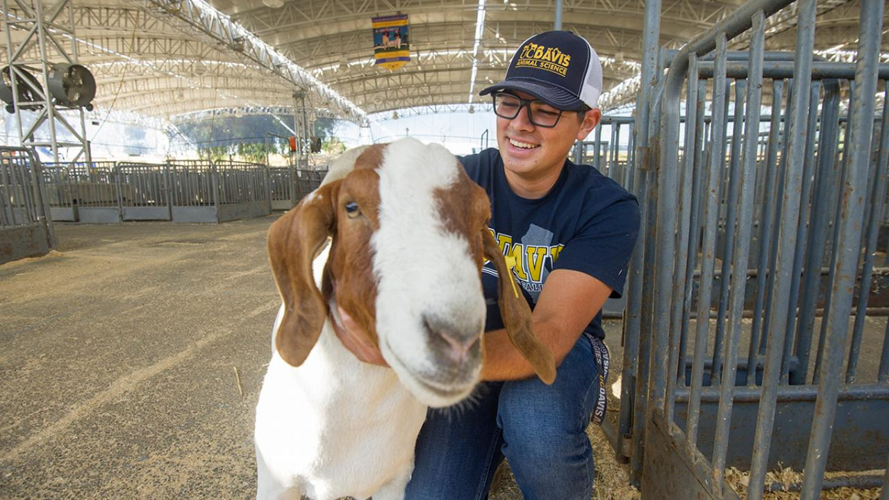 Animal science major Jackson Sawyer with a goat at the State Fair