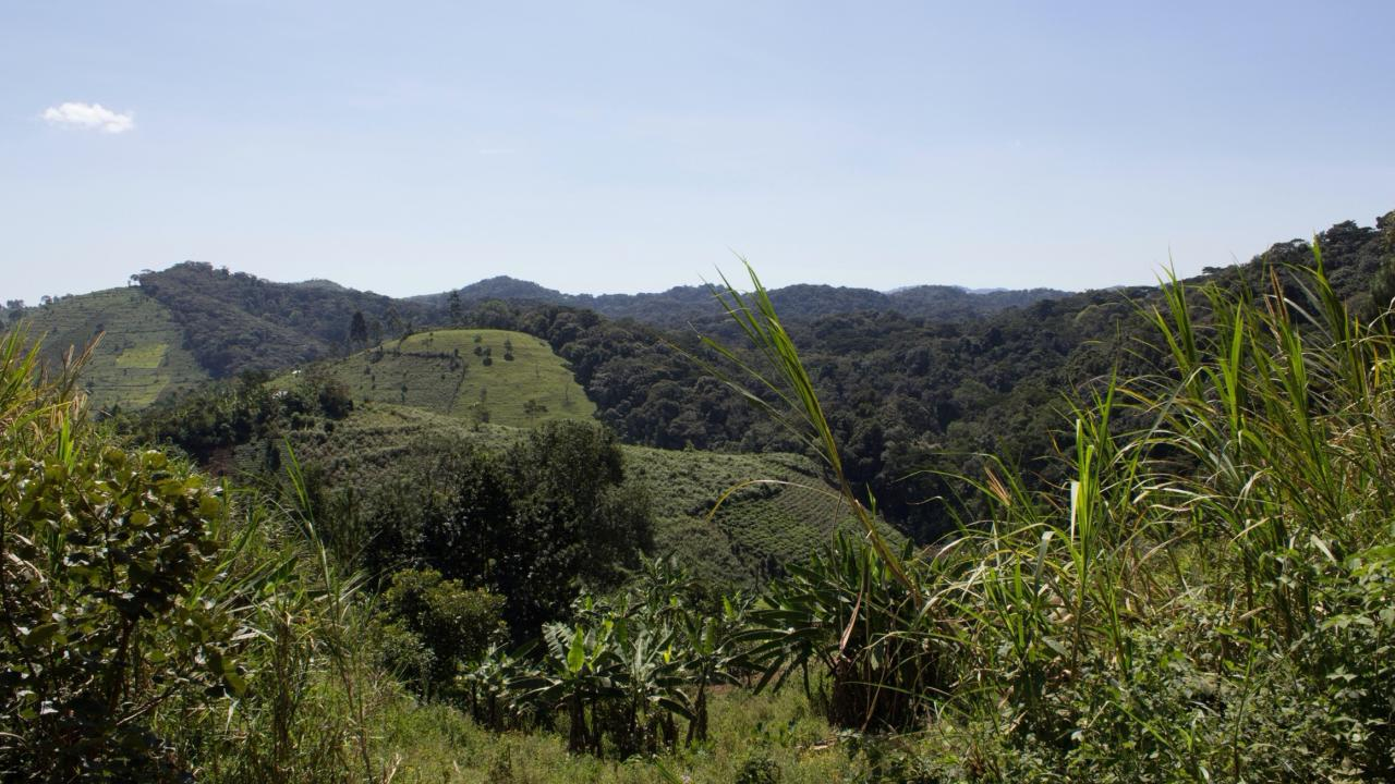 Bwindi Impenetrable Forest in Uganda, landscape