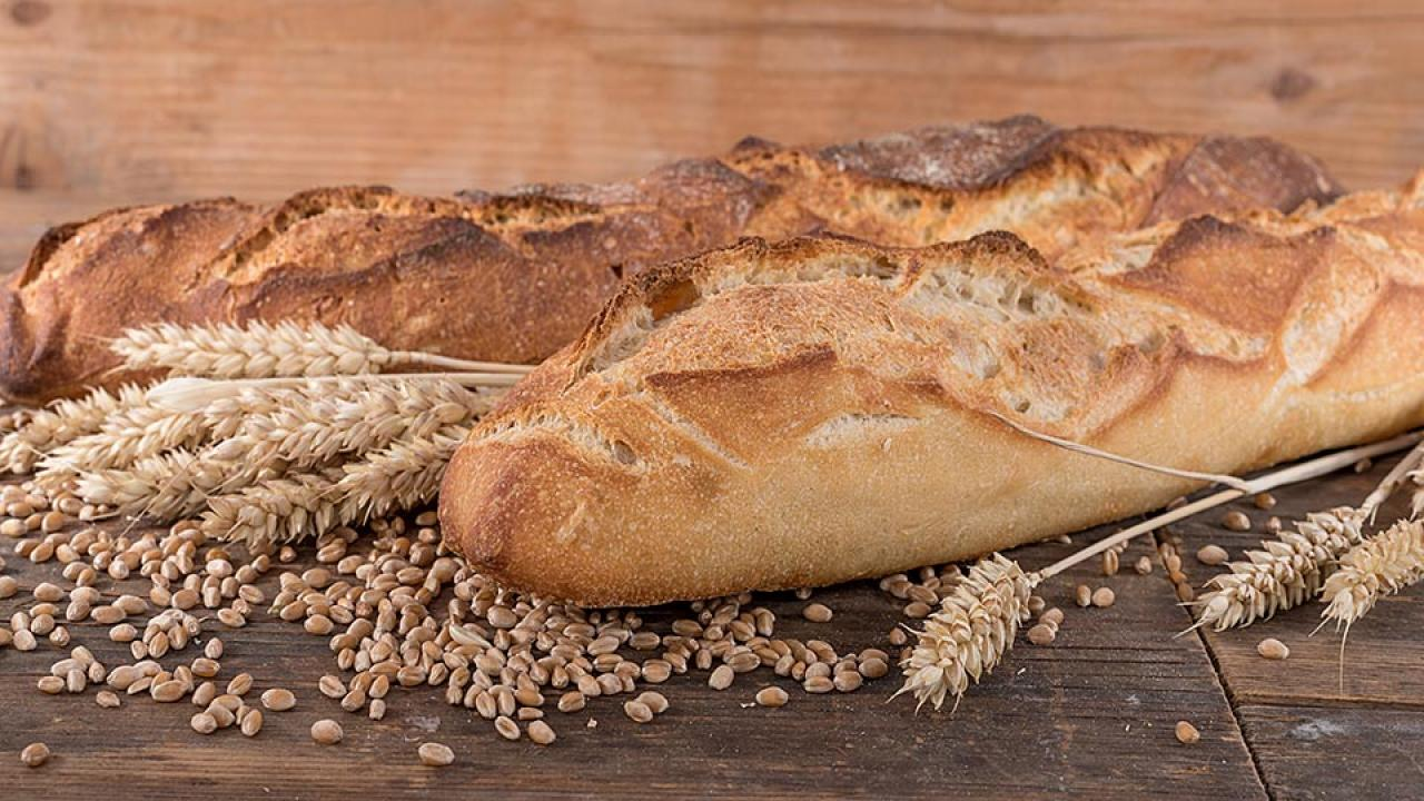 Wheat stalks and kernels with two loaves of French bread